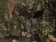 Виды камня (гранит и мрамор) - 1041
