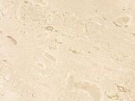 Виды камня (гранит и мрамор) - 1089