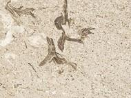 Виды камня (гранит и мрамор) - 1215