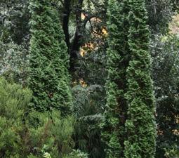 Деревья для посадки